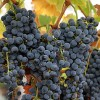 World's oldest winery found In Armenia