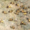 Termites eat up ten million rupees in Indian Bank
